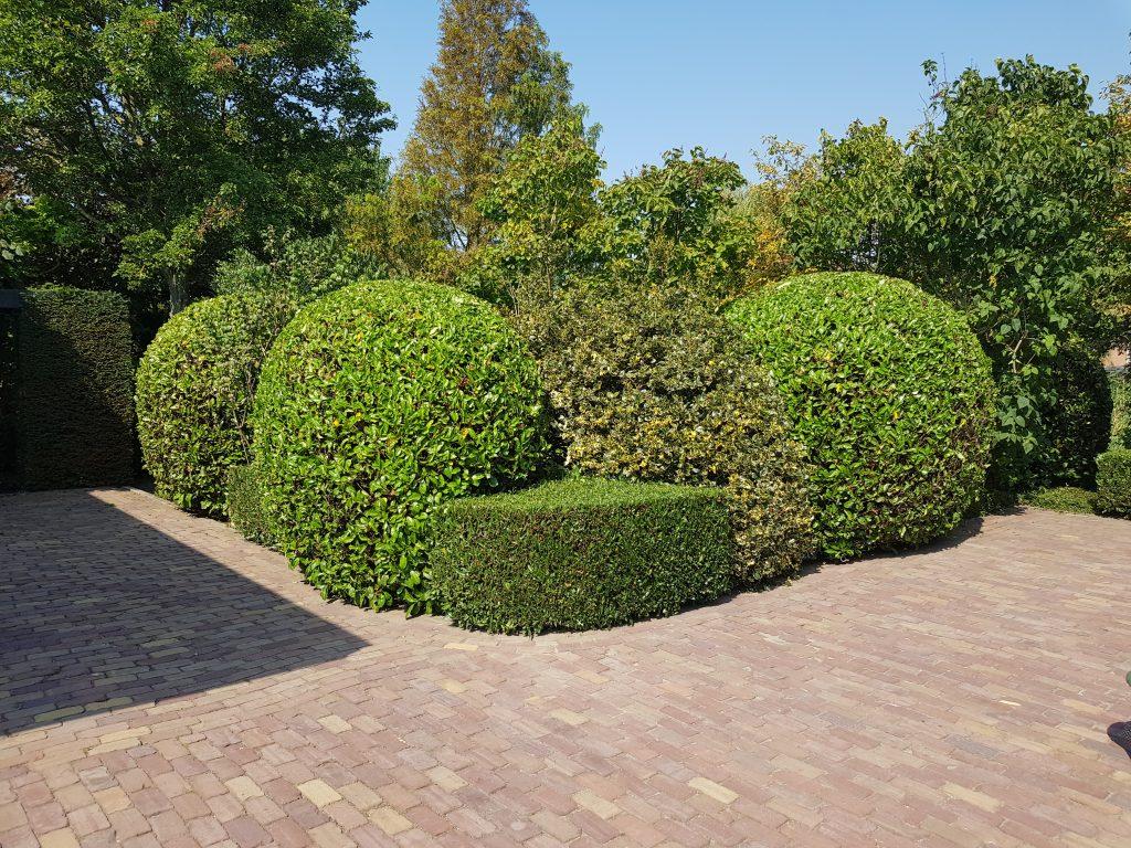 Onderhoud tuin Hoeksche Waard